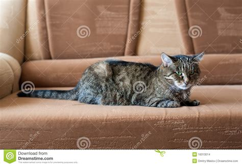 cat on sofa cat on a sofa stock images image 16313014