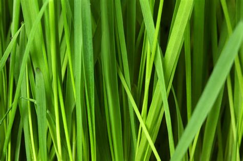 grass background pattern free grass background free stock photo public domain pictures