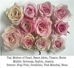 Beautiful Vase Of Flowers Pink Rose Study With Amato Wholesale Flirty Fleurs The