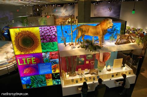 perot museum of nature science dallas r we