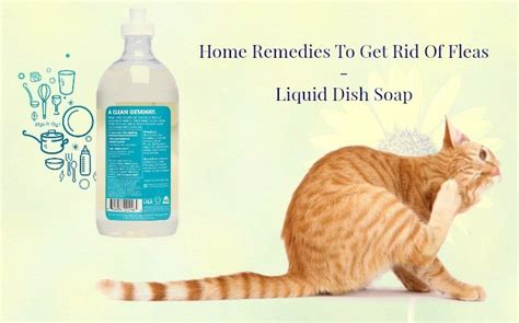 15 home remedies to get rid of fleas on dogs cats in house