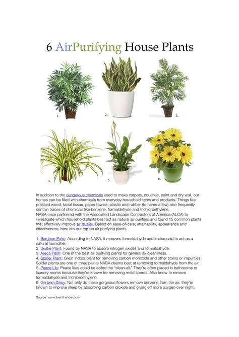 nasa plants air quality page 3 pics about space 6 house plants that improve air quality according to nasa