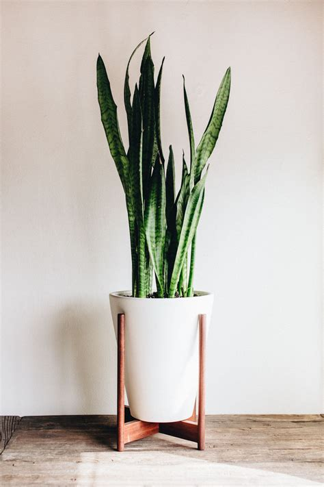 modernica case study funnel planter  wood stand http