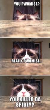 Funny Memes Of Cats - funny cat meme jokes memes pictures