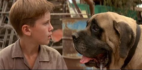 what of is in the sandlot fascinating facts about you probably don t