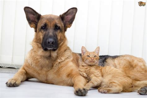 dogs and cats can cats and dogs bond together pets4homes