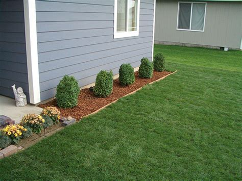 Bushes For Front Of House by Boxwood Shrubs In Front Of House Flickr Photo