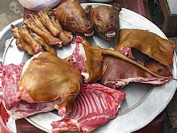 yulin festival in china yulin festival news 110 dogs were rescued from china puppies now