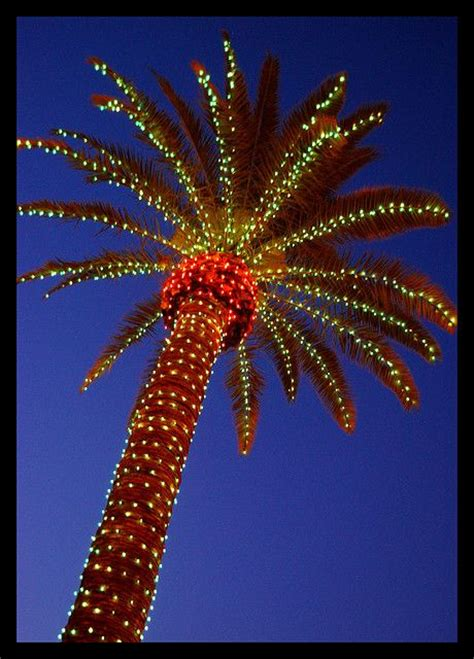 lighted palm tree kmart 104 best images about christmas palmtree on pinterest