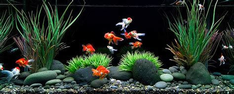 aquarium design kolkata aquarium design group a wet wall pinterest goldfish