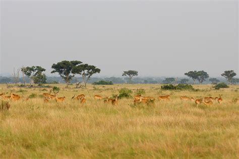queen elizabeth national park uganda wildlife queen elizabeth national park journeys by design