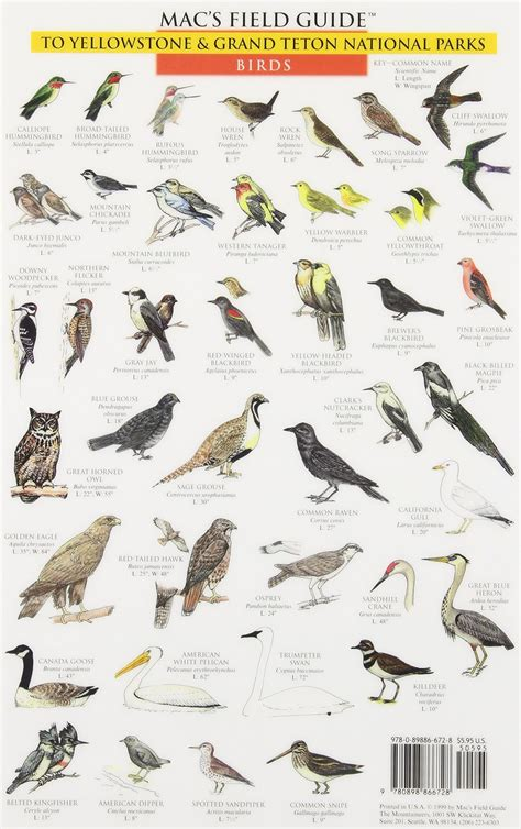backyard bird identification chart lovely backyard bird identification guide 7 macs field