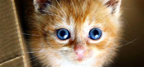 when do kittens change color when do kittens change color catster