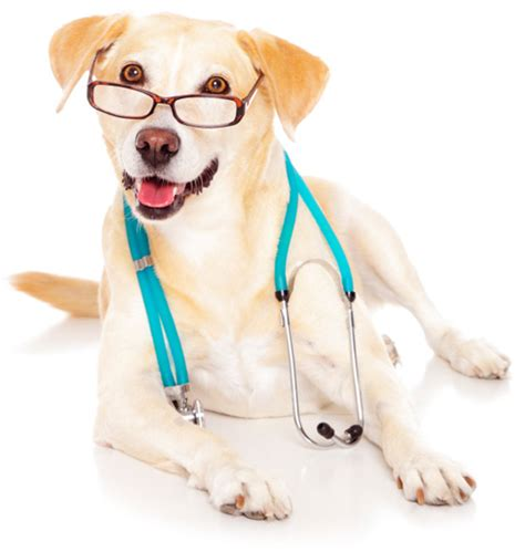 puppy doctor pin doctor on