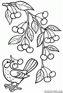 coloriage cerises