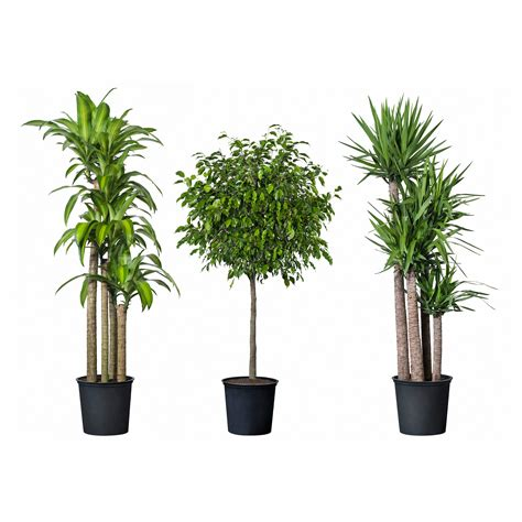 potted plants plants