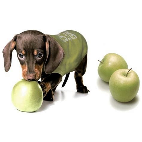 dogs and apples apples and dogs going apple picking with your dogs and apple treats for your dogs