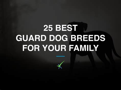 best guard dogs for family 25 best guard breeds for your family