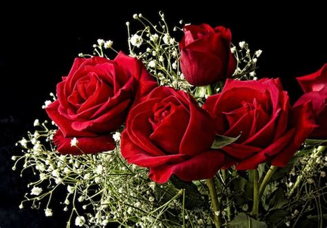 roses for valentines s day roses wallpapers