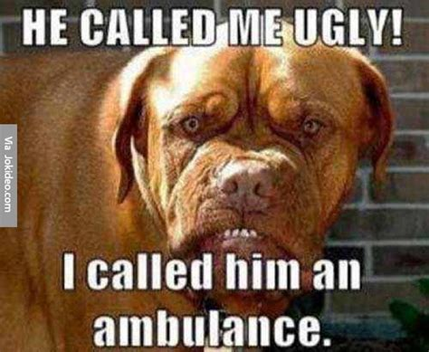 Ugly Dog Meme - cast your vote world s ugliest dog the stephenking