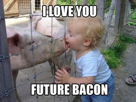 Funny Bacon Meme - pig bacon meme