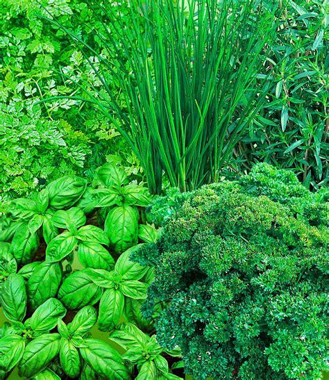 Baldur Garten Erfahrung 4424 by Gew 252 Rzkr 228 Uter Kombination 1a Qualit 228 T Kaufen Baldur Garten