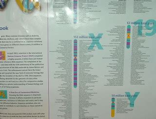 Olay Free Sle by Human Genome Poster