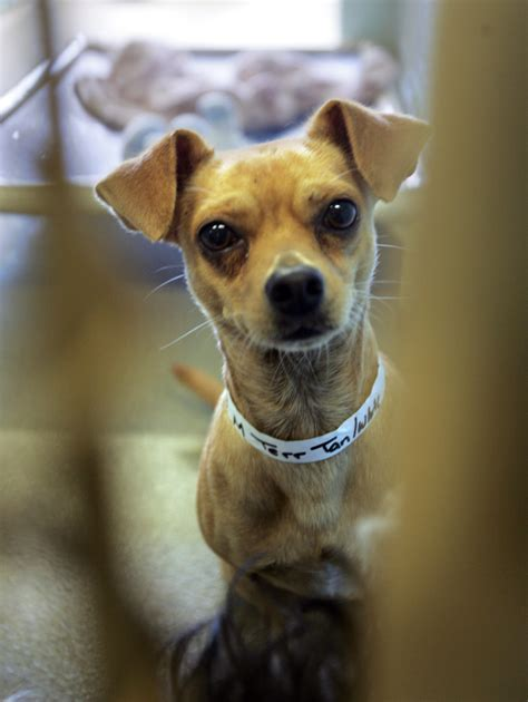 broward shelter broward animal shelter waives adoption fees this weekend as it gets ready to move