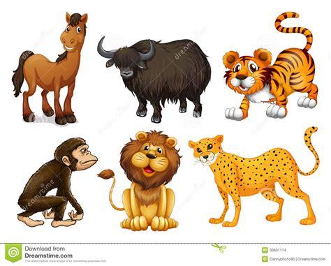 imagenes animales varios diferentes tipos de animales cuadr 250 pedos imagenes de