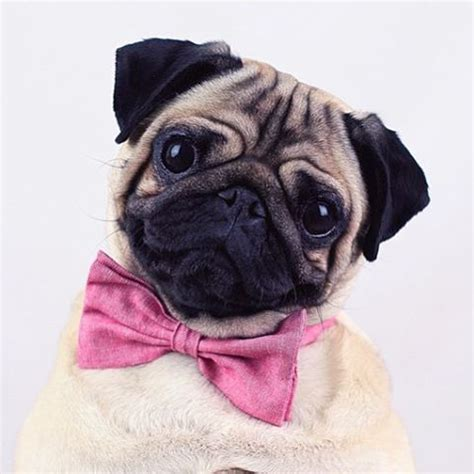 imagenes hipster tumblr animales pug hipster tumblr buscar con google decoupage