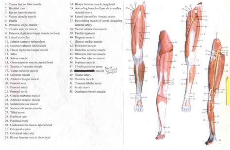 human bone diagram human leg bone structure human anatomy details