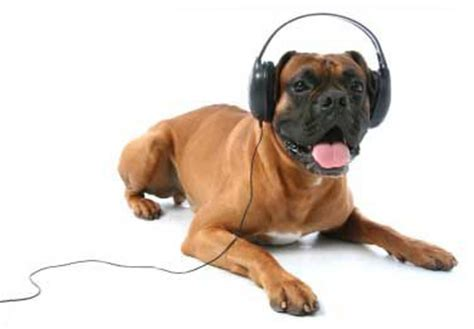 puppy with headphones can you be safe walking your with your headphones
