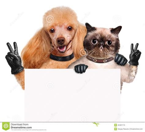 Cat Time Black Leather and cat with peace fingers in black leather gloves