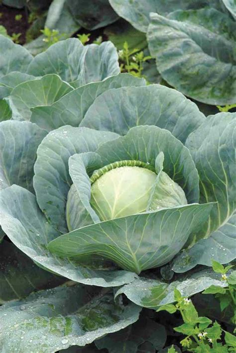 vegetables that grow in shade best vegetables that grow in shade farm and garden