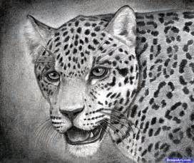 Drawings Of Jaguars How To Draw A Realistic Jaguar Step By Step Realistic