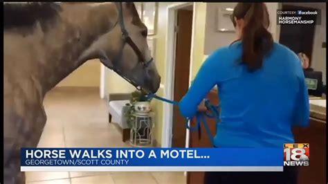 libro a horse walks into horse walks into a motel youtube