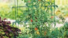 best sized containers cherry tomatoes recipe on