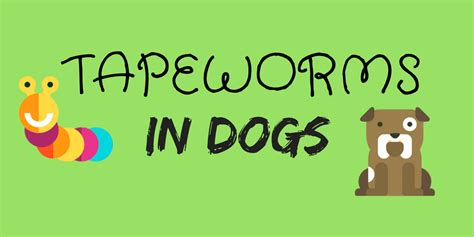 how to get rid of tapeworms in dogs tapeworms in dogs causes prevention and treatments