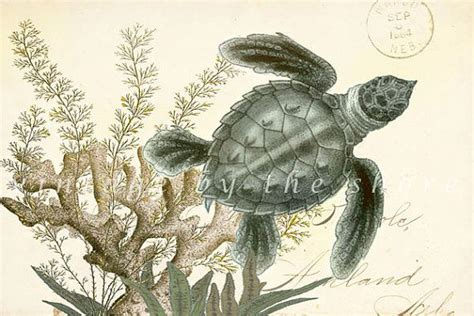 natural history painting nautical collage quot sea turtle quot natural history art print 6x4