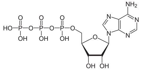 biography generic structure adenosintriphosphat wikipedia