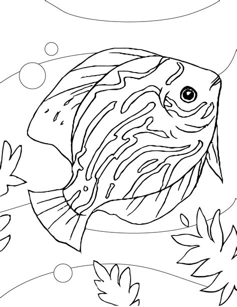 coloring pages of freshwater fish discus coloring page handipoints