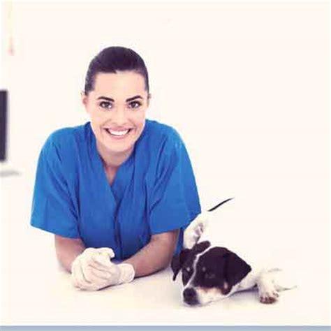 puppy uti treatment 7 of the top cystitis treatments petcarerx