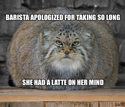 10 Pallas's Cats Tell Coffee Puns