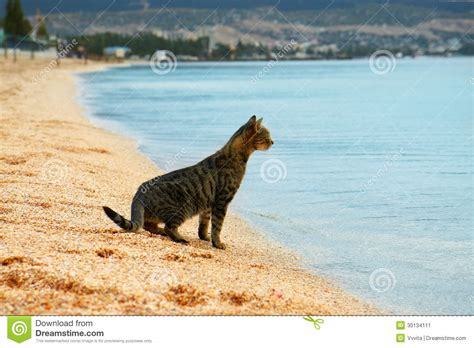 Sea Of Cats cat looks at the sea stock image image of