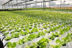 serre local fields pdf diversity of urban and hydroponic farms of the future to