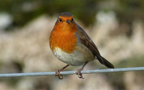 a kilchoan diary garden birds