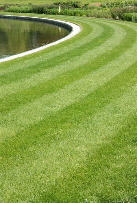Course On Lawns What You Should by Ornamental Grass Seed Mix Amenity