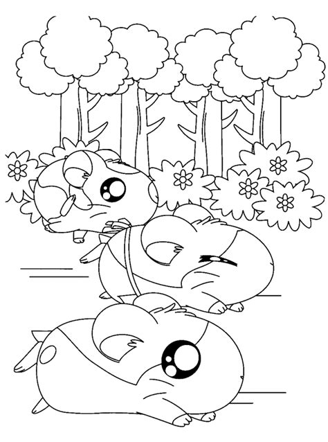 hamsters coloring pages az coloring pages
