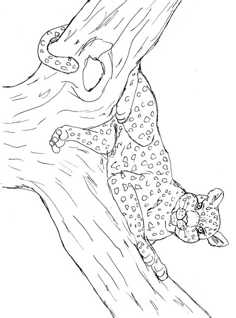 Leopard Coloring Page Animals Town Animal Color Sheets Color For Print L