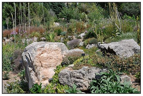 Alpine Rock Garden Growing With Plants The Alpine Rock Garden At The Denver Botanic Gardens